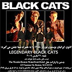 new-black-cats