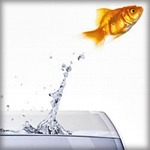 free-norouz-goldfish