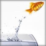 free-norouz-goldfish