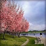 lake-balboa-persian