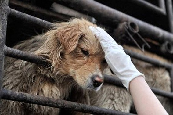 Rescued dog in China