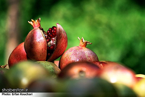 Harvesting-Pomegranate-in-Sangan-Village-Iran-4176