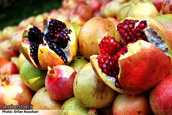 Harvesting-Pomegranate-in-Sangan-Village-Iran-4478