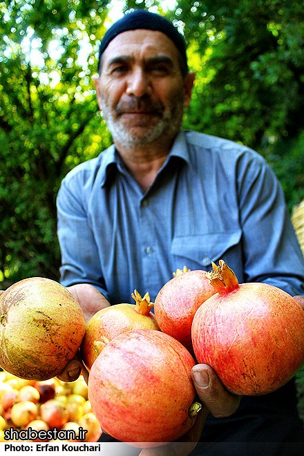 Harvesting-Pomegranate-in-Sangan-Village-Iran-7019