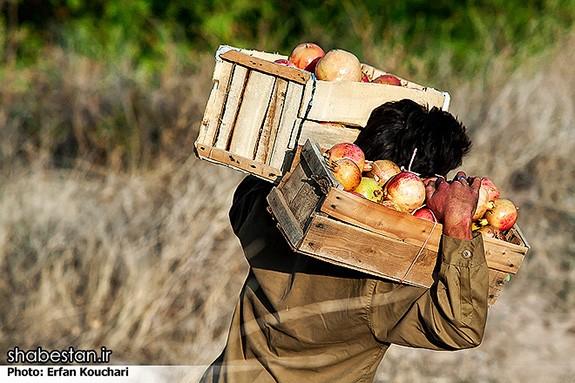 Harvesting-Pomegranate-in-Sangan-Village-Iran-7036