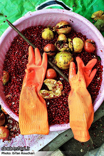 Harvesting-Pomegranate-in-Sangan-Village-Iran-9309