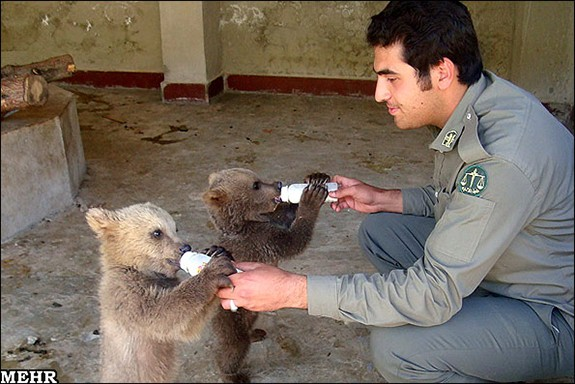 bear-cubs-Lorestan-Iran5